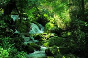全てのものには自然の流れ、循環がある。人体も自然に循環するとき健康に戻る。